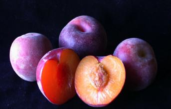 Black Velvet Apricot